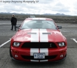 Mustangs in Iceland