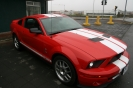 Shelby Tribute_1